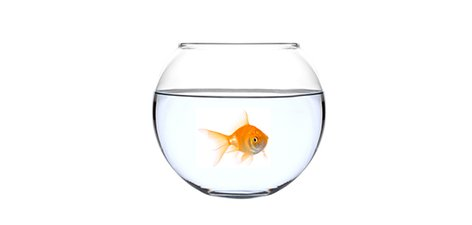 Goldfish in a bowl - photo#23