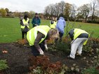 News: Branching Out - 1) The Branching Out group planting spring bulbs at the Whitehall Recreation Ground in Bromley